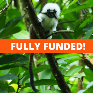 Urgent Appeal to Protect Rainforest in Colombia for Endangered Primates