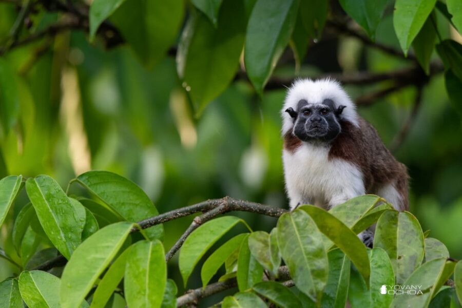 Your Swift Action Saved Precious Rainforest Acres for Two Critically Endangered Primates, and Much More