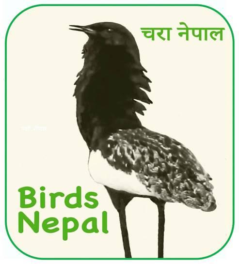 Birds Nepal